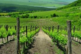 Wine Tour for Mr Erik Nicolaysen