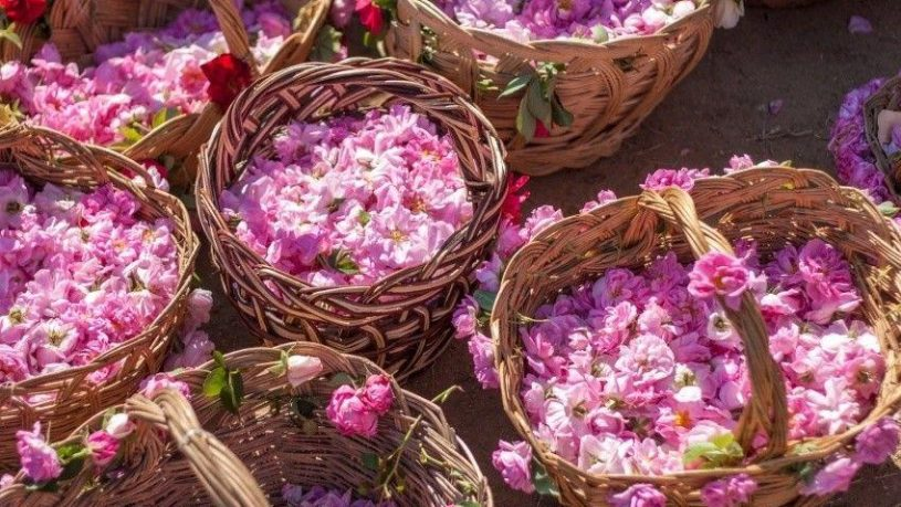 rose festival tour